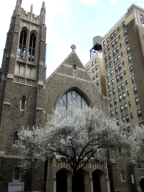 flowering tree in front of church on the Upper West Side