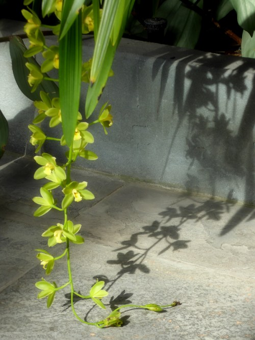 green orchid and shadow