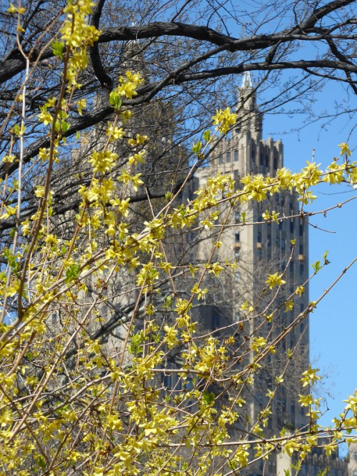 San Remo towers in the spring