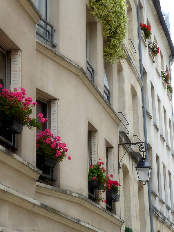 Paris window boxes