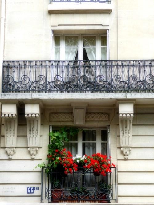 Red geraniums in Paris