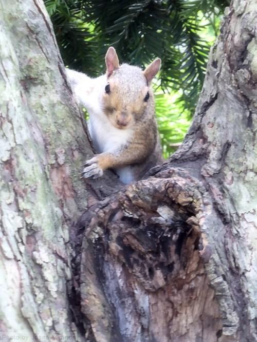 squirrel-debut