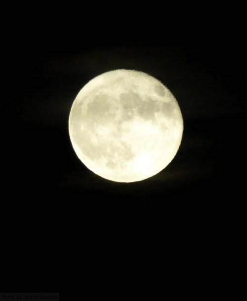 harvest-moon-closeup