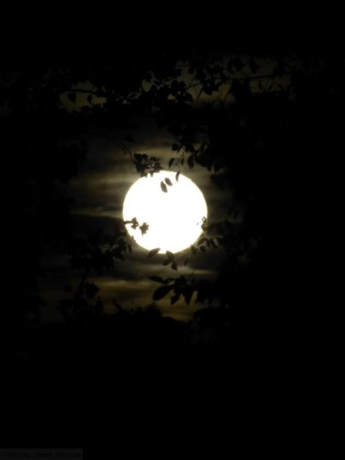 harvest-moon-through-the-trees