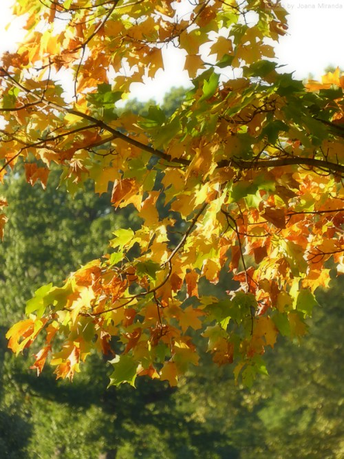 leaves-turning-colors-in-central-park