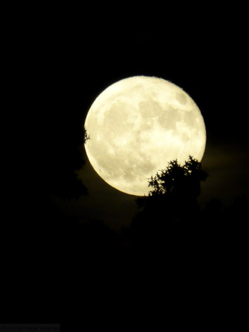 moon-through-the-trees-2