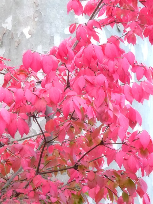 red-leaves-against-a-camoflage-tree