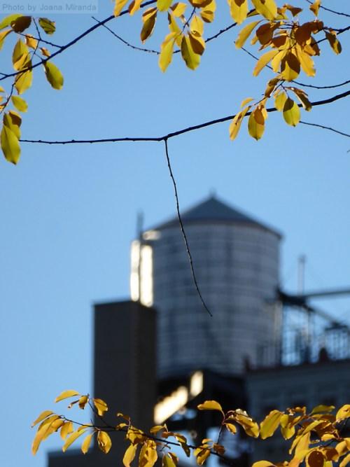 water-tower-on-the-upper-west-side-framed-by-fall-foliage