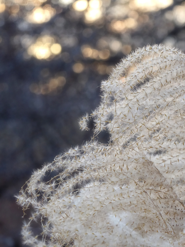 Photo of soft feathery fern fronds in the Conservatory Garden, taken by Joana Miranda