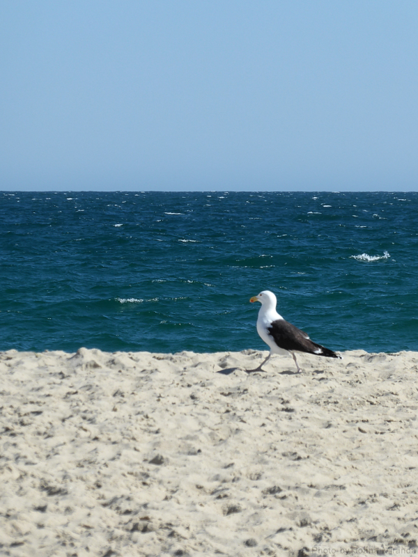 Photo of seagull on the beach in Nantucket, taken by Joana Miranda