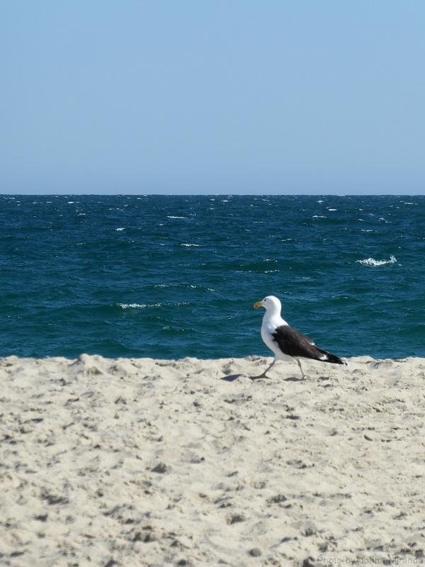 Photo of seagull on the beach in Nantucket, taken by Joana Miranda