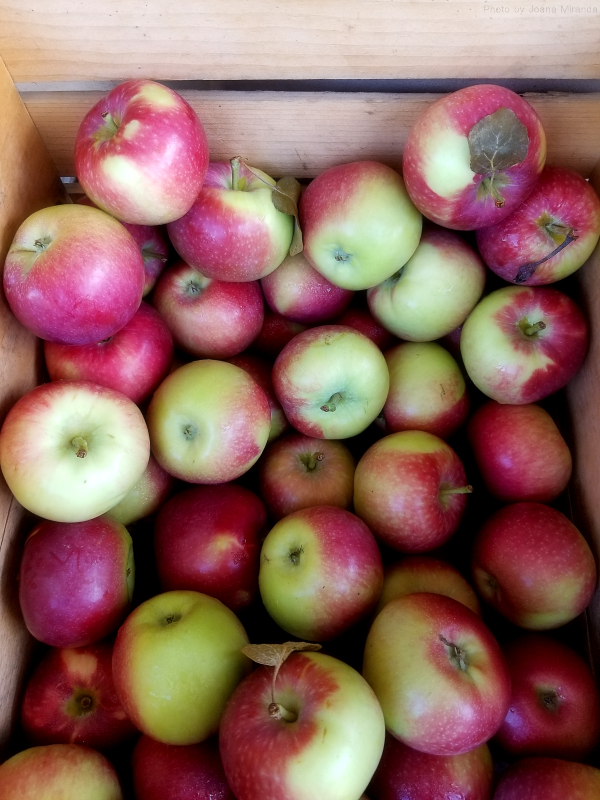 Photo of organic apples at Vermont farm stand