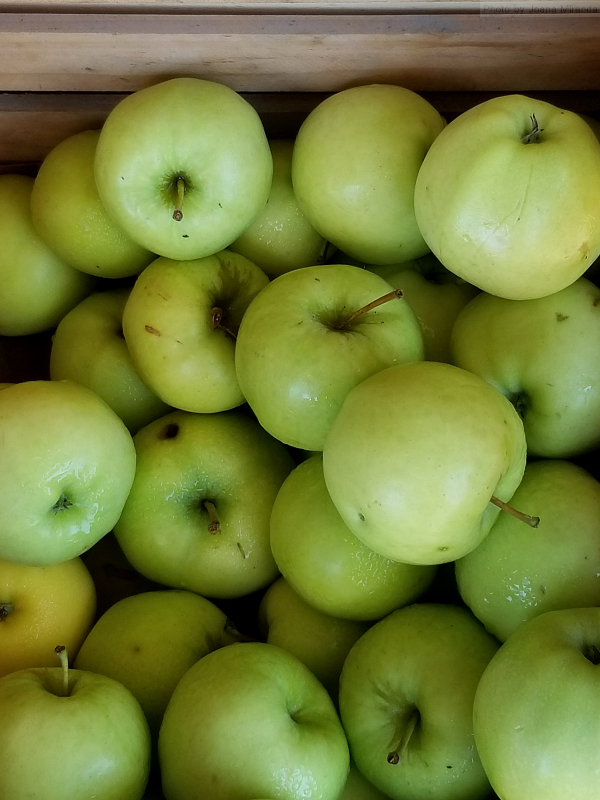 Photo of organic green apples at Vermont farm stand