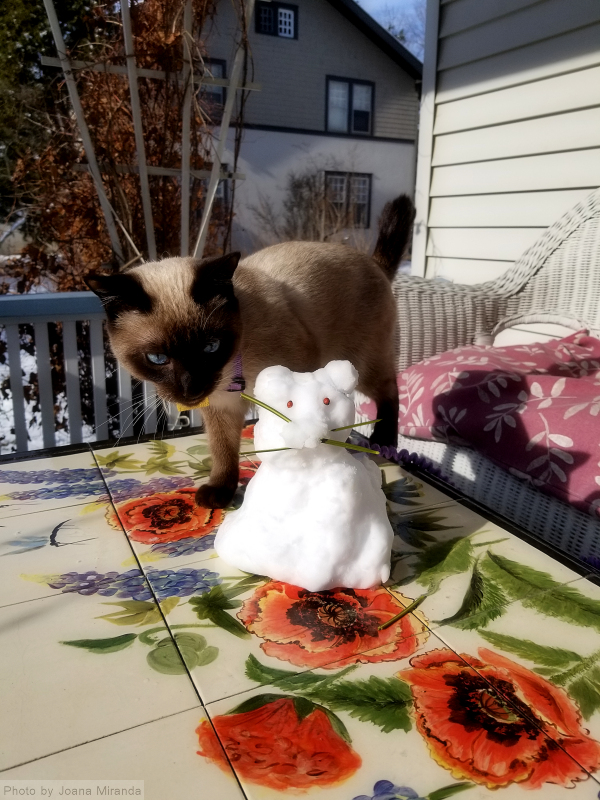 Puck and his snowcat.jpg