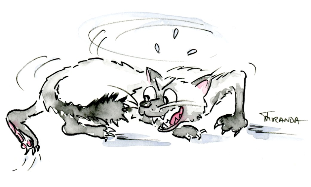 Creative-Brain-at-Work-Cat-Chasing-Tail-Cartoon-by-Joana-Miranda