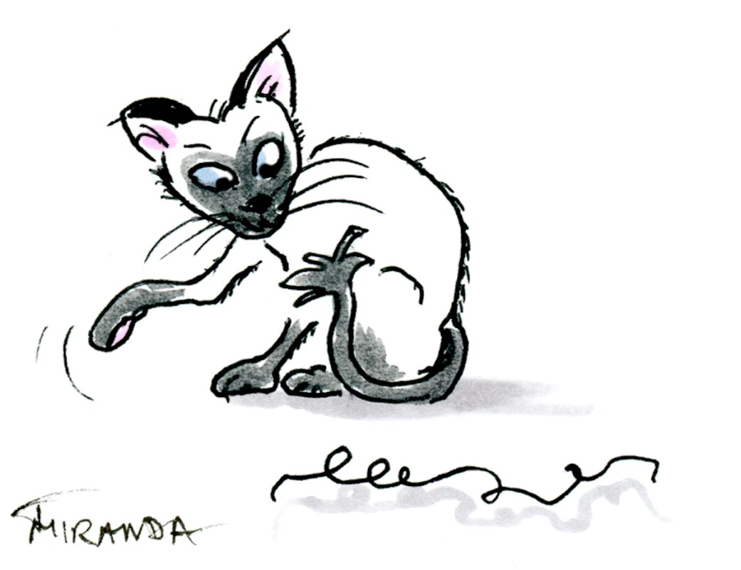 Siamese cat cartoon by Joana Miranda