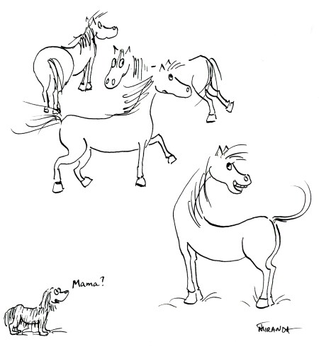 Freehand ink sketches of 4 horses and a dog, by Joana Miranda