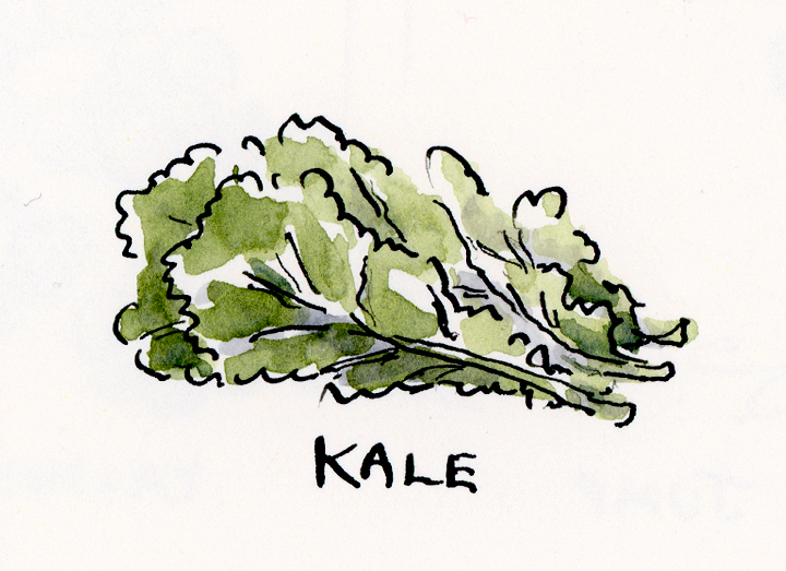 Ink and watercolor illustration of a bunch of kale