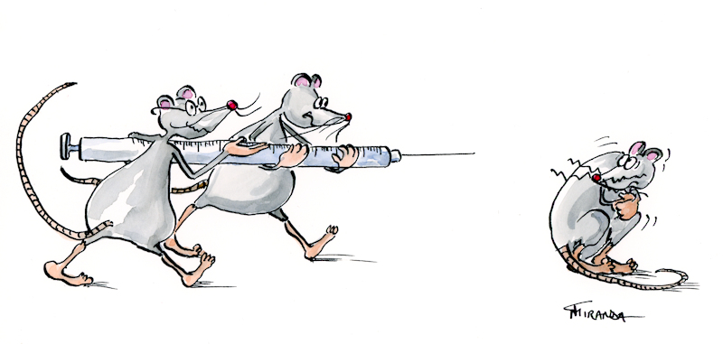 Ink and watercolor cartoon illustration of a mouse getting a vaccine, by Joana Miranda