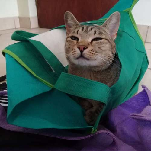 Mogwai in shopping bags