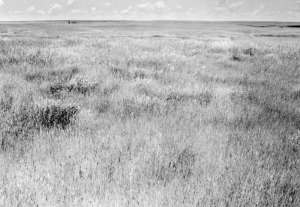 2008009005 Grassland Waves 2008