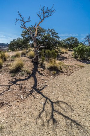 20170402DC Ancient Pinon, NM 2017