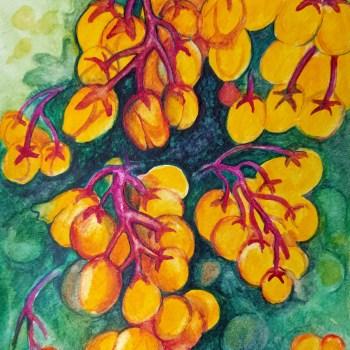 Budding Oregon Grape