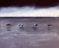 Eiders in Flight