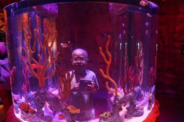 Nephew Sea Life at I-drive 360