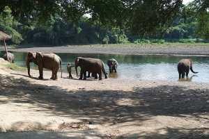 Elephants World Kanchanaburi