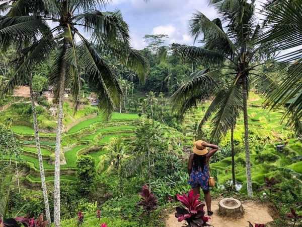 Viewing the Tegalalang Rice in Bali