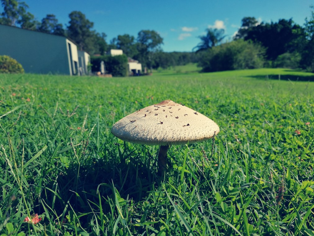 The Lone Toadstool
