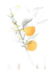 joannalayla_apricot_A3