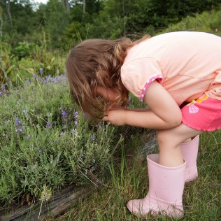 Taking the time to smell the lavender. Copyright Jo-Ann