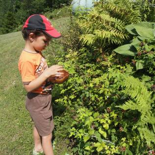 Kameron exploring the black raspberry bush. Copyright Jo-Ann Blondin