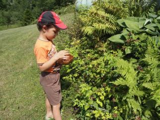 Kameron exploring the black raspberry bush. Copyright Jo-Ann Blondin