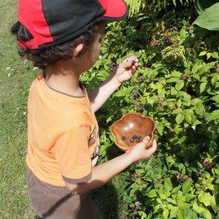 Little hands love picking their food. Copyright Jo-Ann Blondin