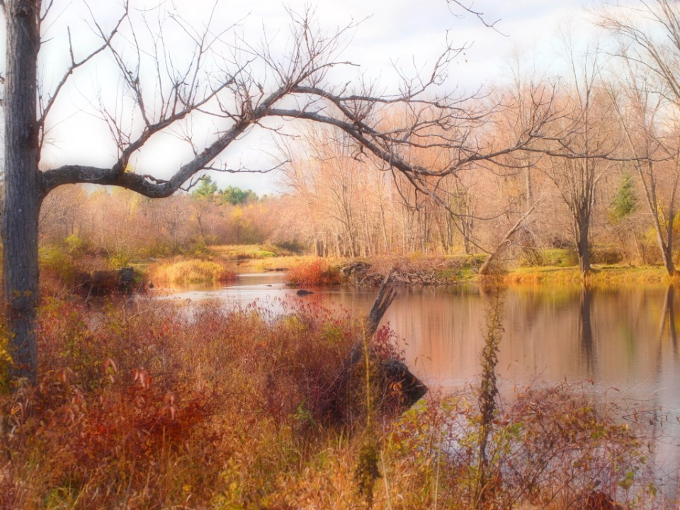 The colours of fall at Riverbend - copyright Jo-Ann Blondin