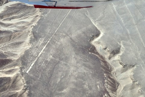 Nazca-Linien, Kolibri