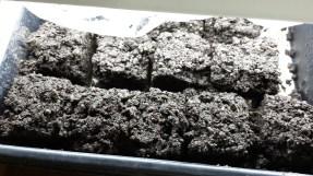 planted soil blocks