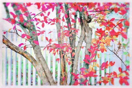 White Fence with Autumn Tree