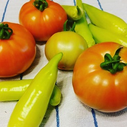 tomatoes and peppers from my garden