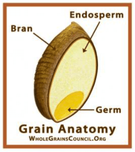 Anatomy of a Whole Grain/JoAnn's Food Bites