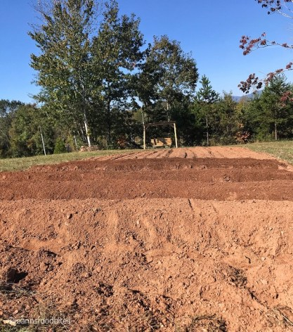 dirt for leafy greens and lettuce is ready
