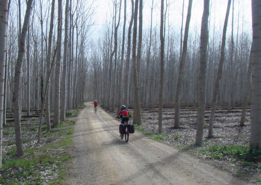 Girona Gravel Ride bosque JoanSeguidor