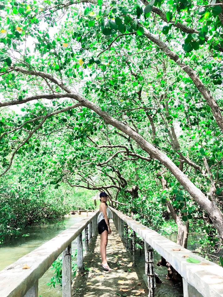talabong mangrove
