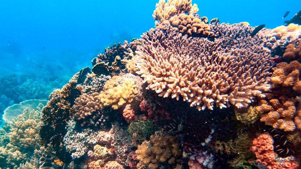 coral reef batangas