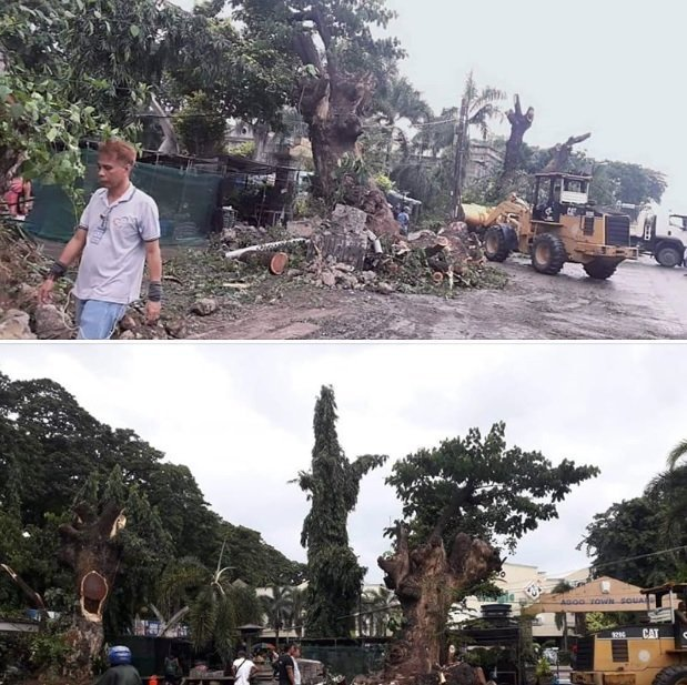 Agoo, La Union cutting down of trees