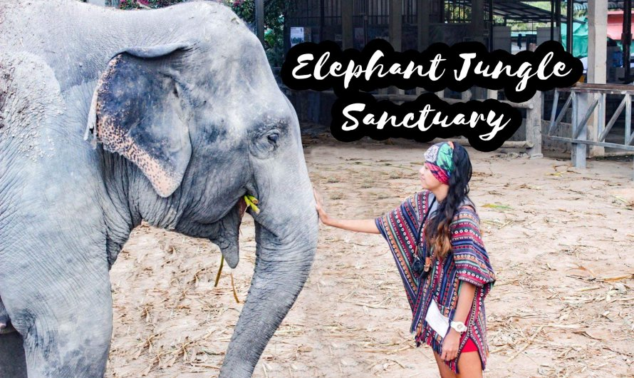 "Thailand's Elephant Jungle Sanctuary has ""NO RIDING"" Policy! – Travel Guide"
