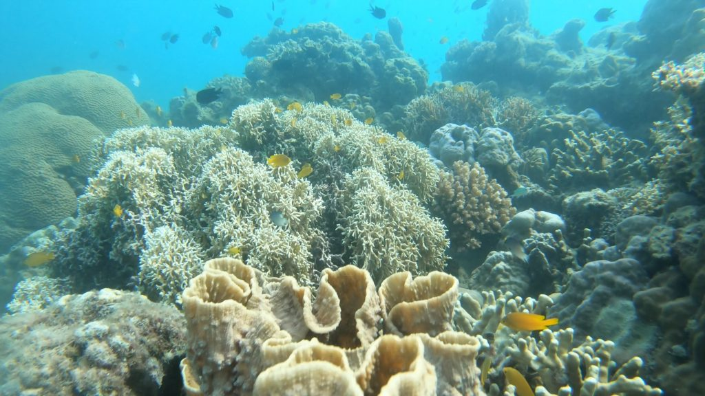 samal island freediving